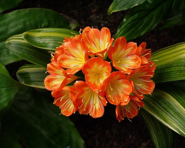 national-botanic-garden-of-wales-677357_640